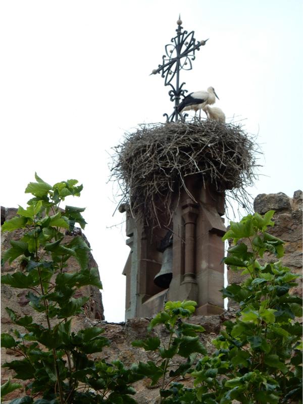 storks in eguisheim