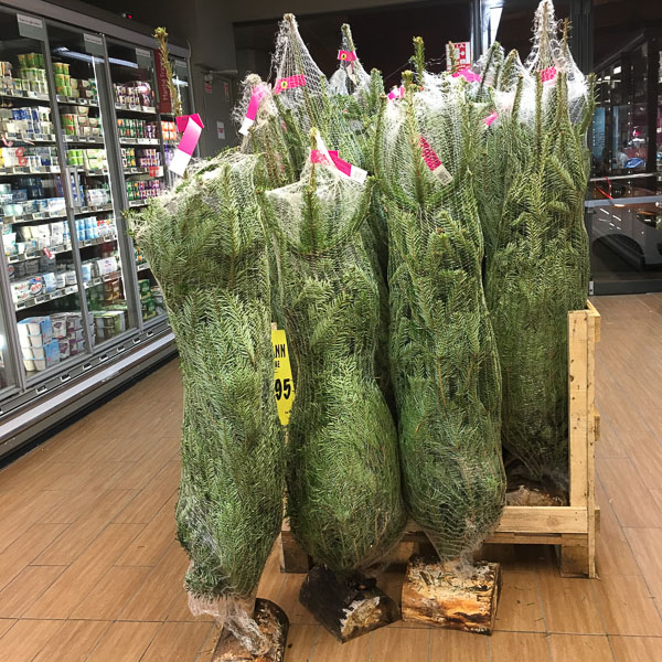 Christmas tree shopping in France
